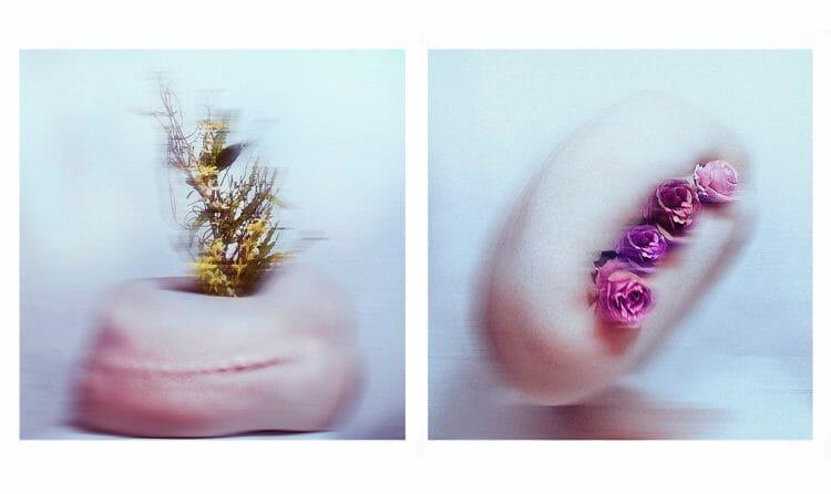 The_Wild_Rose_Mesmerizing_Stories_beautifulbizarre (8)