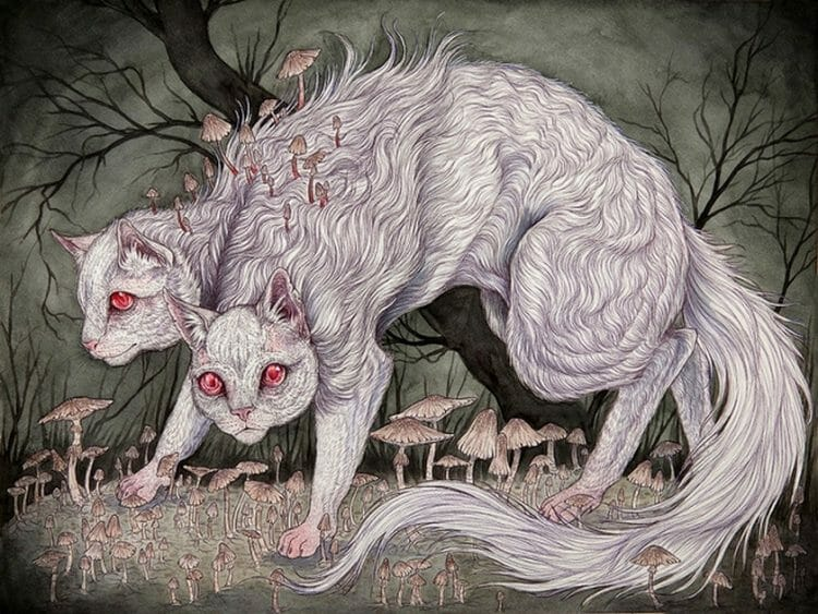 Caitlin_Hackett_cats_Beautiful_Bizarre