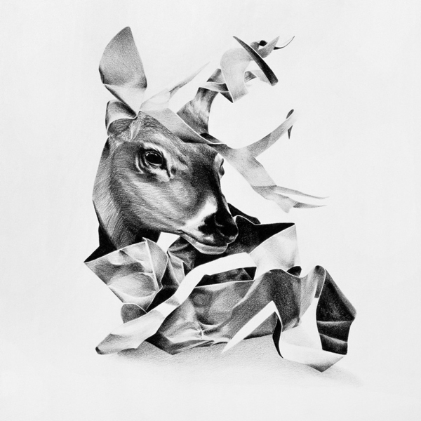 Christina Empedocles Deer Drawing