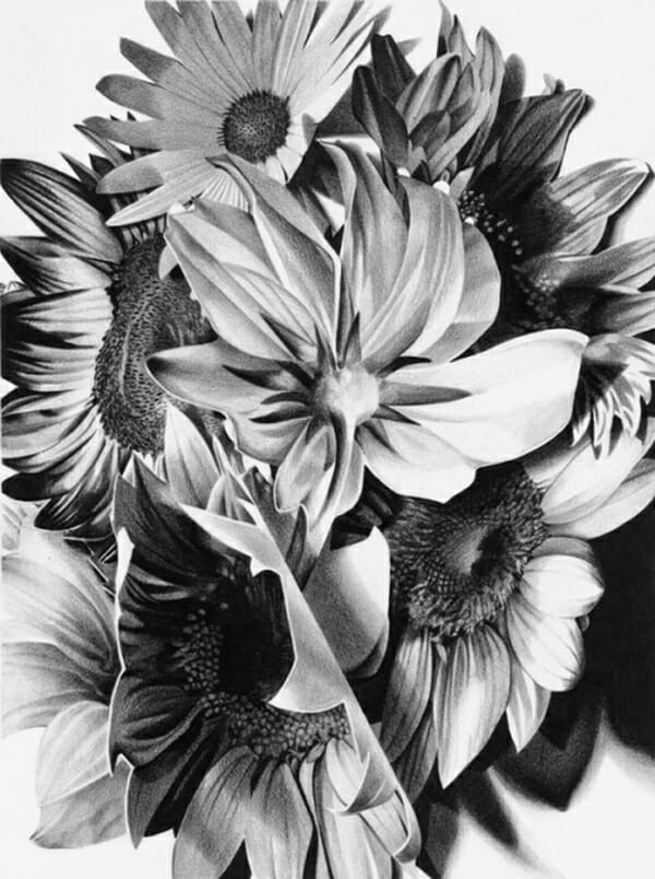Christina Empedocles Sunflowers Drawing
