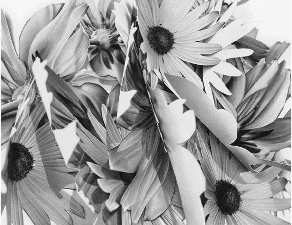 Christina Empedocles Sunflowers2Drawing