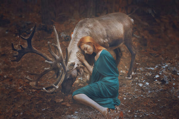Katerina Plotnikova Photography Reindeer