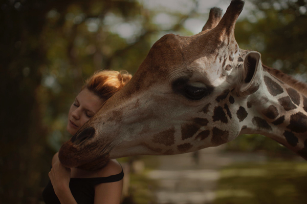 Katerina Plotnikova Photography giraffe