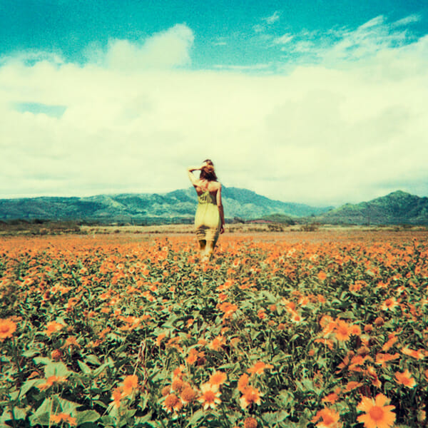 Neil Krug Photography Daisy fields
