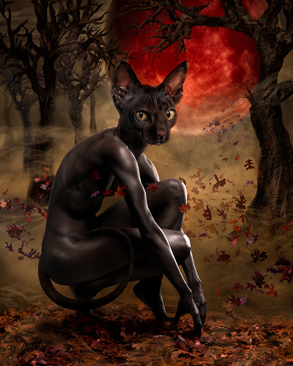 La Chat Noir_beautifulbizarre_014