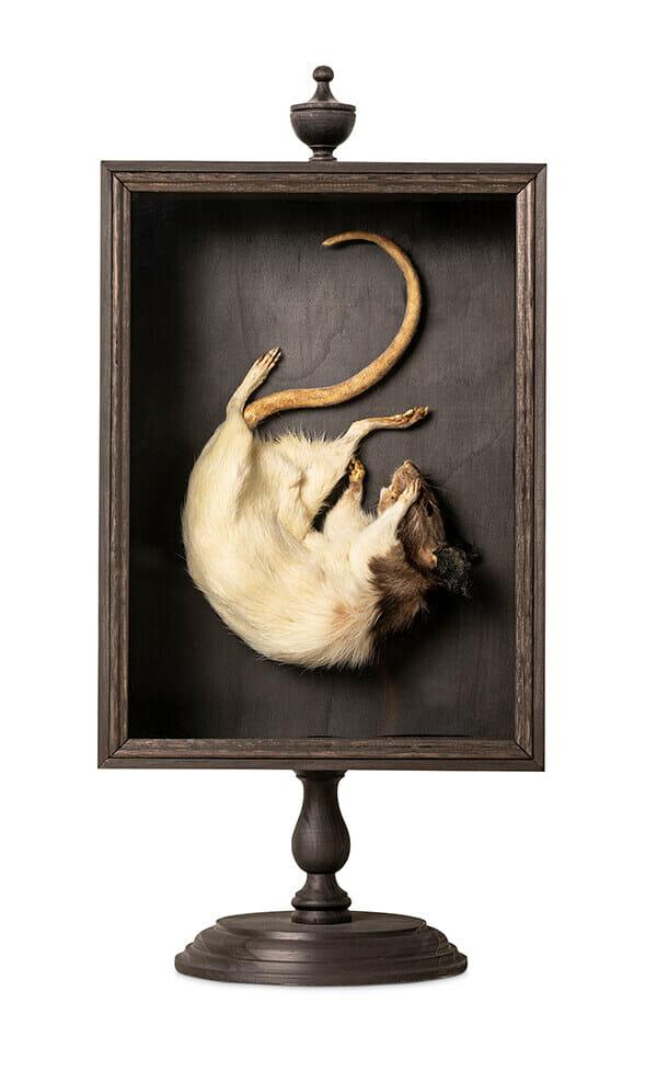 Julia deVille surreal rat shadowbox taxidermy