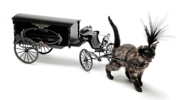 Julia deVille surreal cat carriage taxidermy