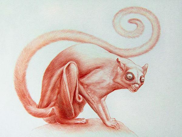 Jean-Pierre Arboleda animal drawing