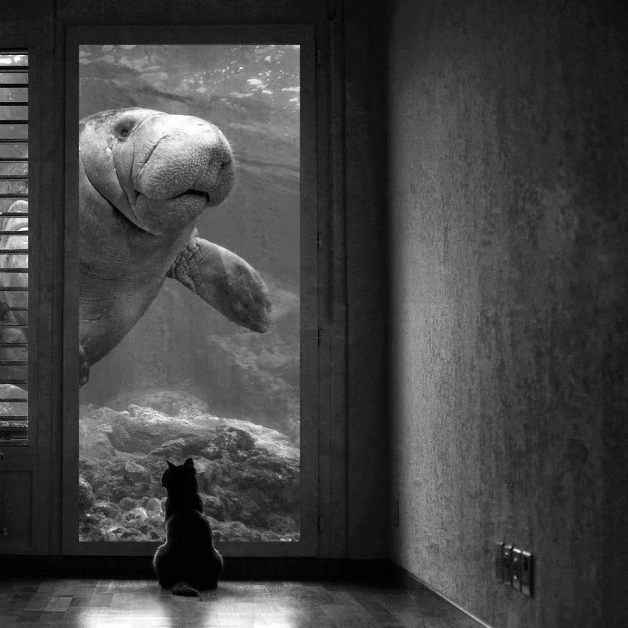 Sarah DeRemer cat surrealistic photomanipulation