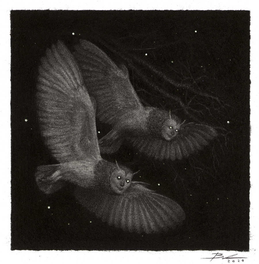 Babs Webb owl drawing