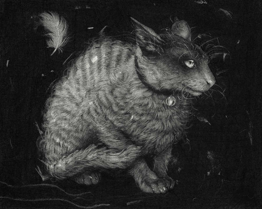 Sam Wolfe Connoley Cat Scratch illustration