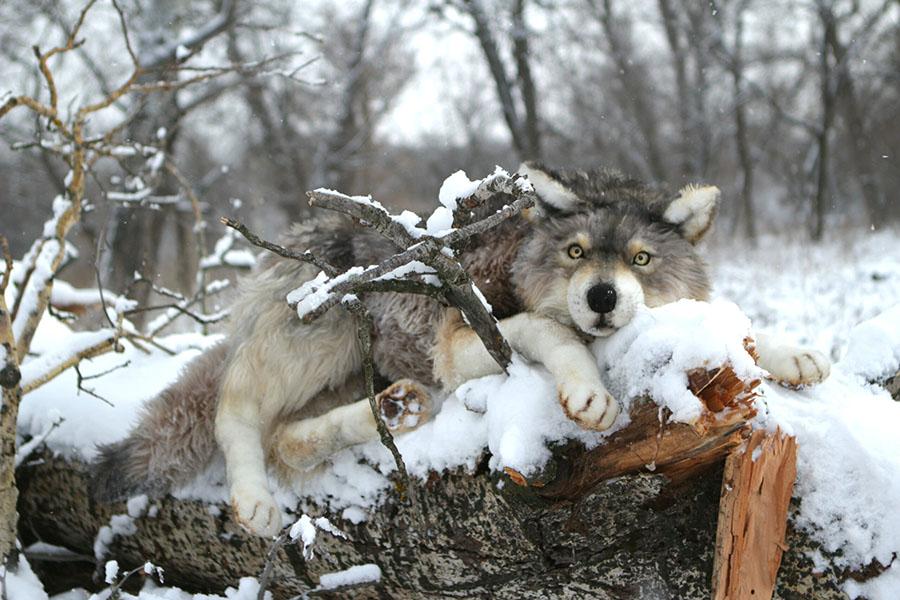 Katerina Makogon-wolf-sculpture-snow-winter  Beautiful Bizarre Art Prize